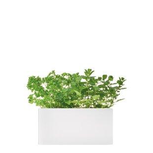 Serra Glass Planter Box By Leonardo