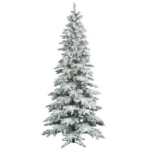 Flocked Utica 12 White Green Fir Trees Artificial Christmas Tree With 1150 Incandescent Stand