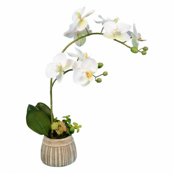 Faux Orchid Arrangements