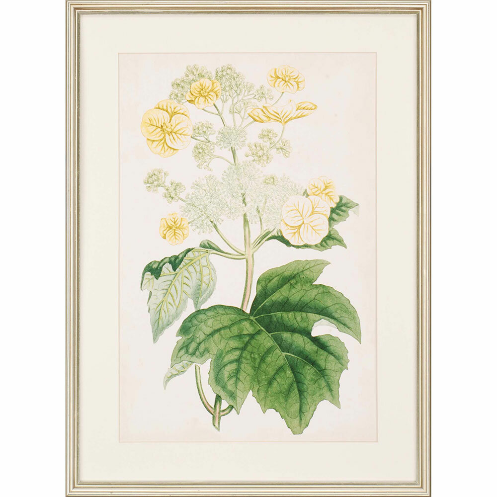 Floral Lace II by Curtis Framed Painting Print | Birch Lane