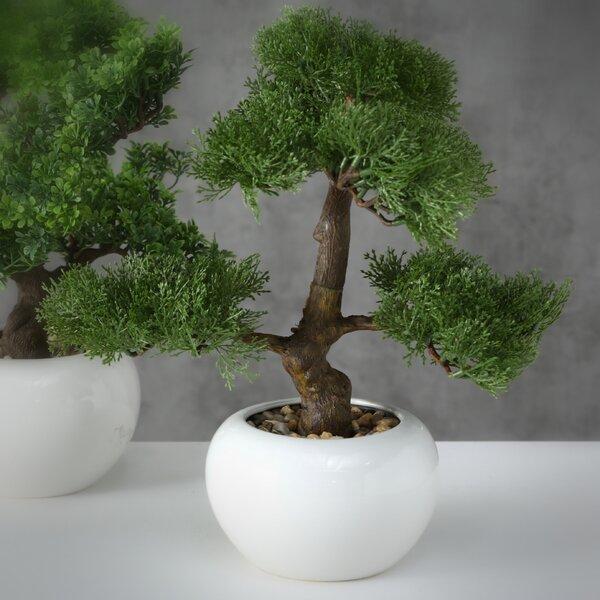 Gracie Oaks Realistic Harland Boxwood Bonsai Tree In Pot Reviews Wayfair