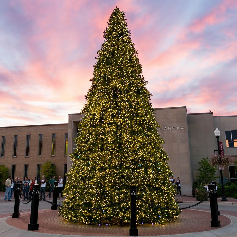 Vickerman Grand Teton 14' Green Artificial Christmas Tree With