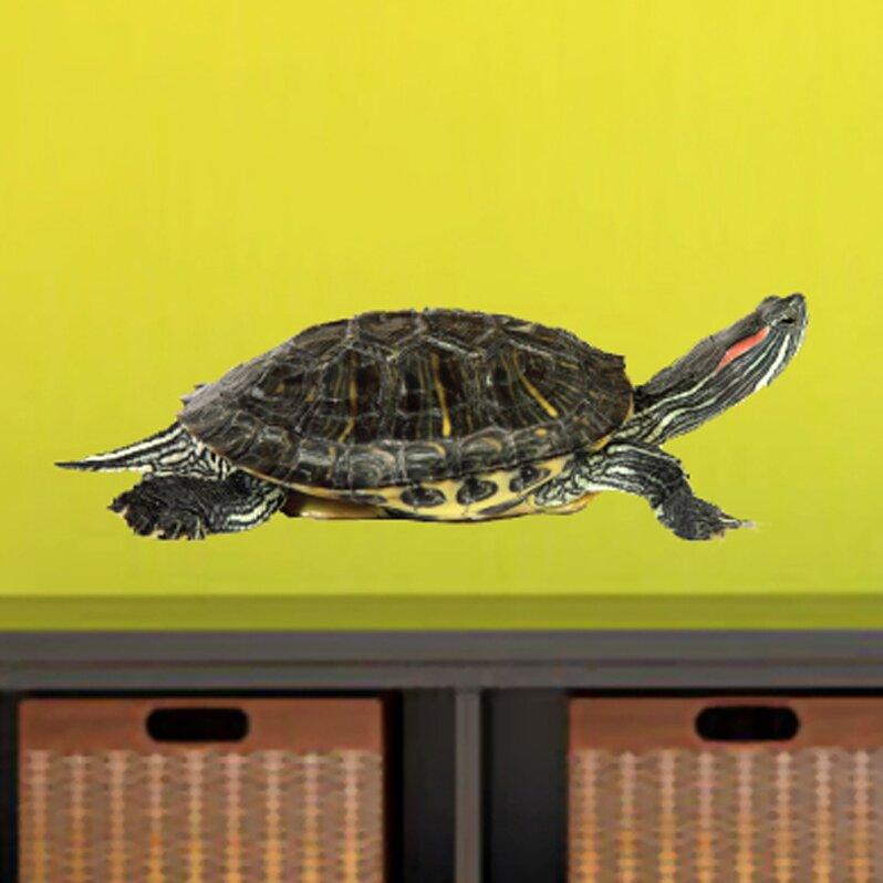 Sweetumswalldecals Real Life Turtle Printed Wall Decal Wayfair Ca