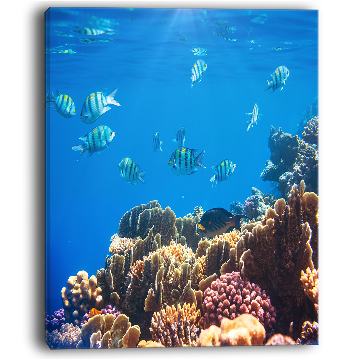 Designart Bright Blue Waters And Coral Fish Large Seashore Photographic Print On Wrapped Canvas Wayfair