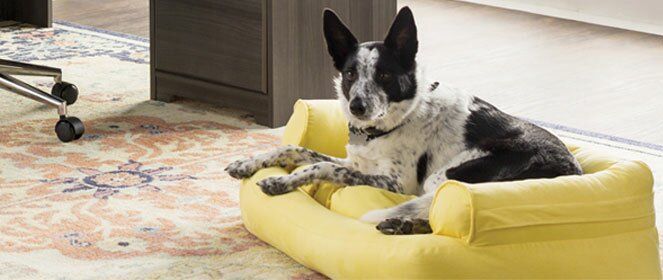 Pet Furniture Wayfair Ca