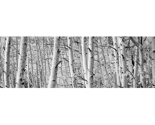 Aspen Trees in a Forest Wall Art on Wrapped Canvas  sc 1 st  Wayfair & Aspen Trees Wall Art | Wayfair