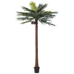 Palm Tree In Pot Image