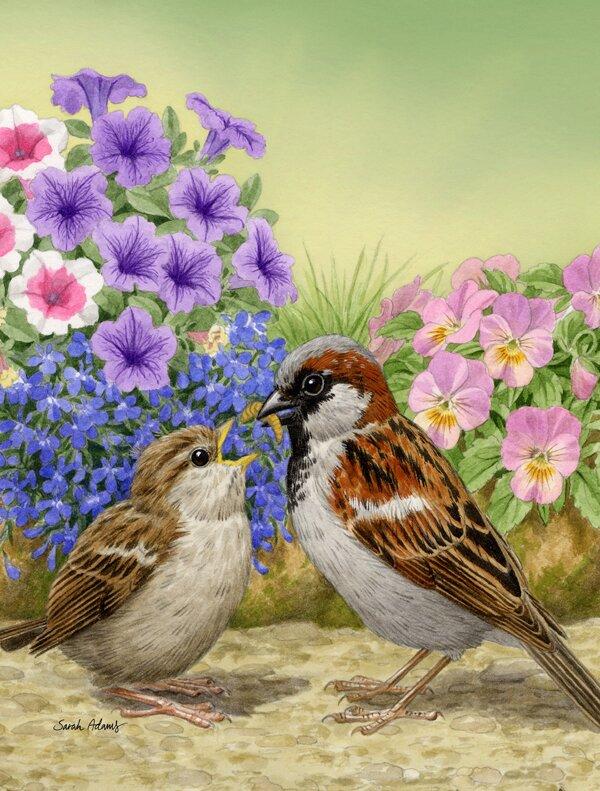 Caroline S Treasures House Sparrows 2 Sided Polyester 40 X 28 In House Flag Wayfair