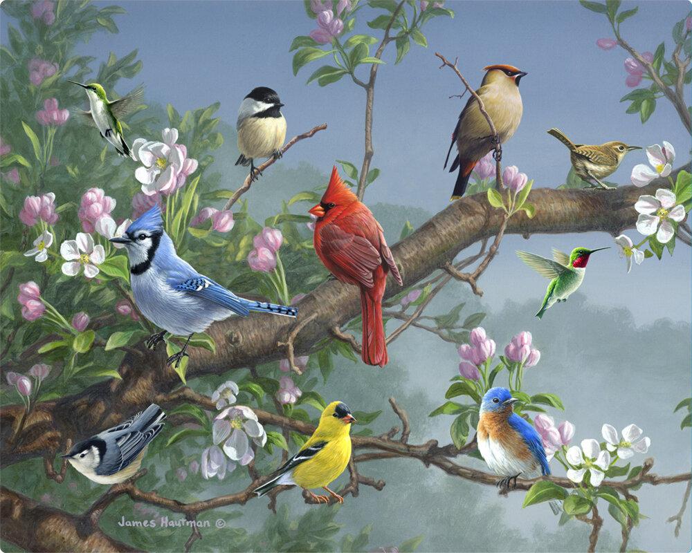Magic Slice Songbirds in Apple Blossoms by James Hautman Non-Slip ...