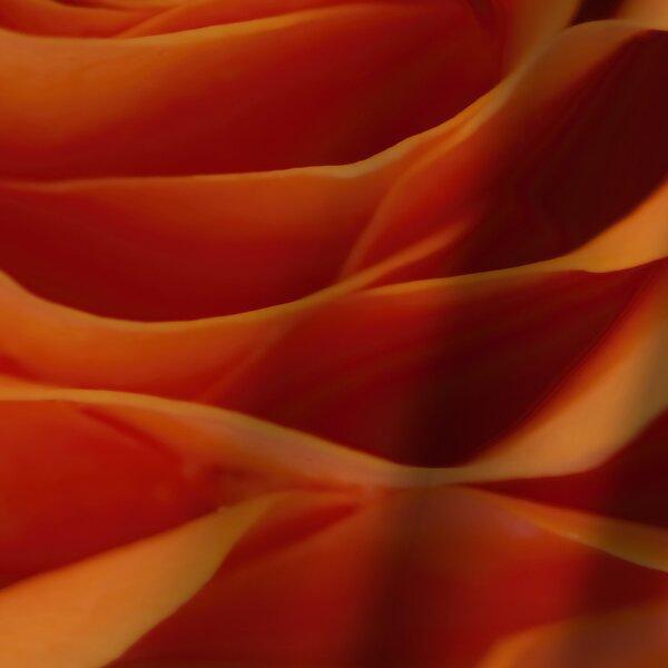 East Urban Home Mirja Paljakka Orange Rose Detail Single Shower Curtain Wayfair