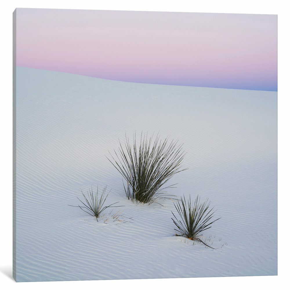 East Urban Home Soaptree Yucca I Sands National Monument New Mexico Usa By Panoramic Images Photographic Print On Wrapped Canvas Wayfair