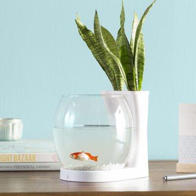 Gordie 0.75 Gallon Betta Planter Aquarium Bowl Archie & Oscar Color: White