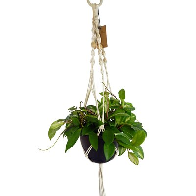 Hanging Planters You Ll Love In 2019 Wayfair