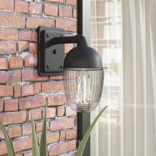 Williston Forge Ardith 1-Light Outdoor Sconce