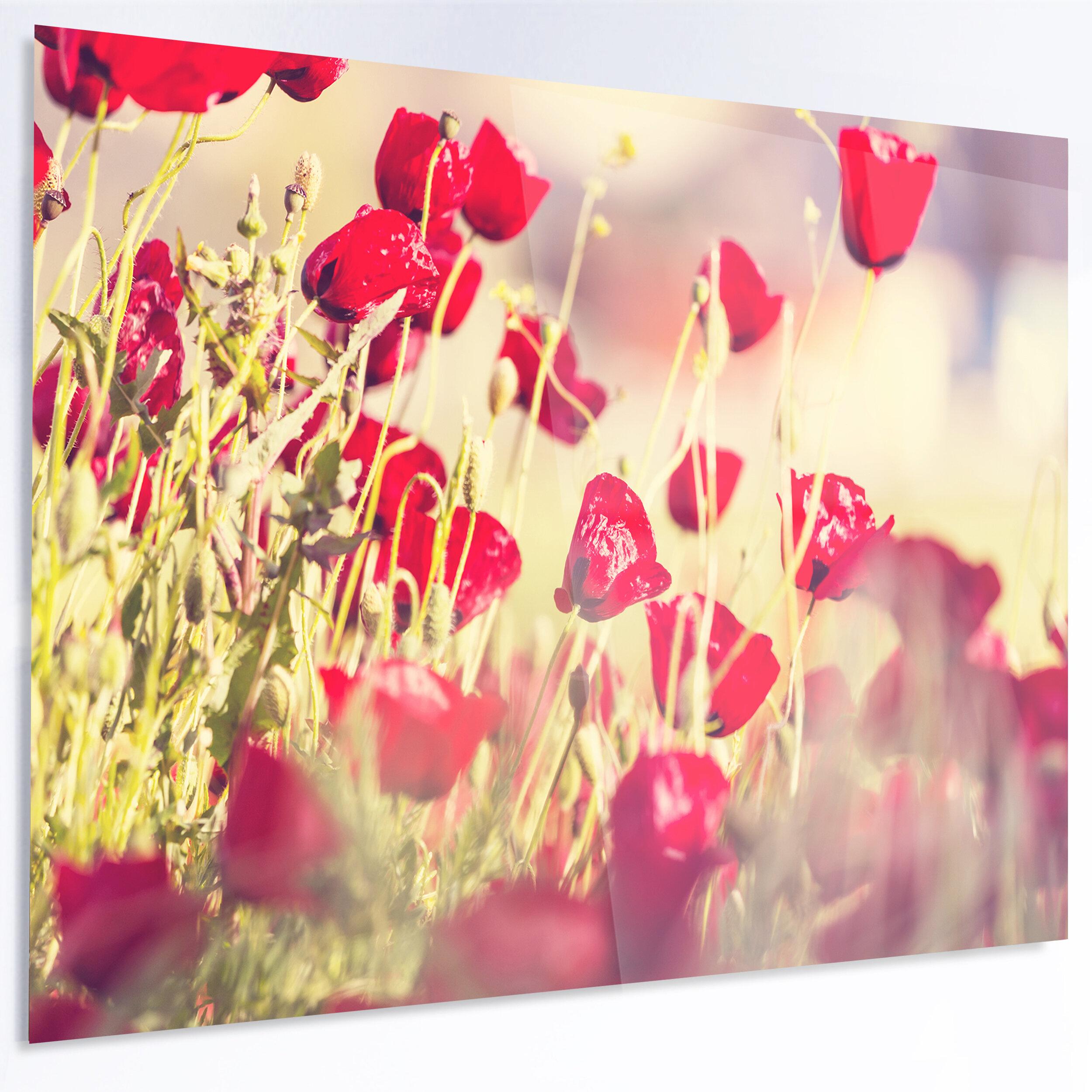 DesignArt \'Poppy Flowers on Light Background\' Photographic Print on ...