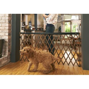 Find for Expansion Walk Thru Safety Gate By Evenflo