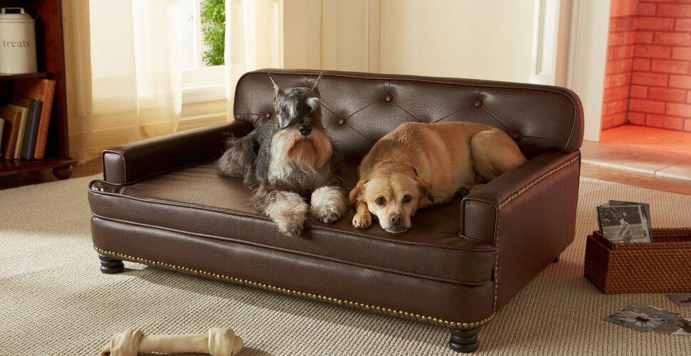 dog beds you'll love | wayfair