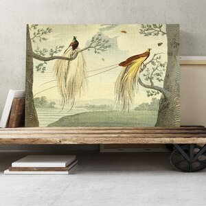 'Vintage Great Paradise Bird' by Charles Reuben Ryley Painting Print on Canvas
