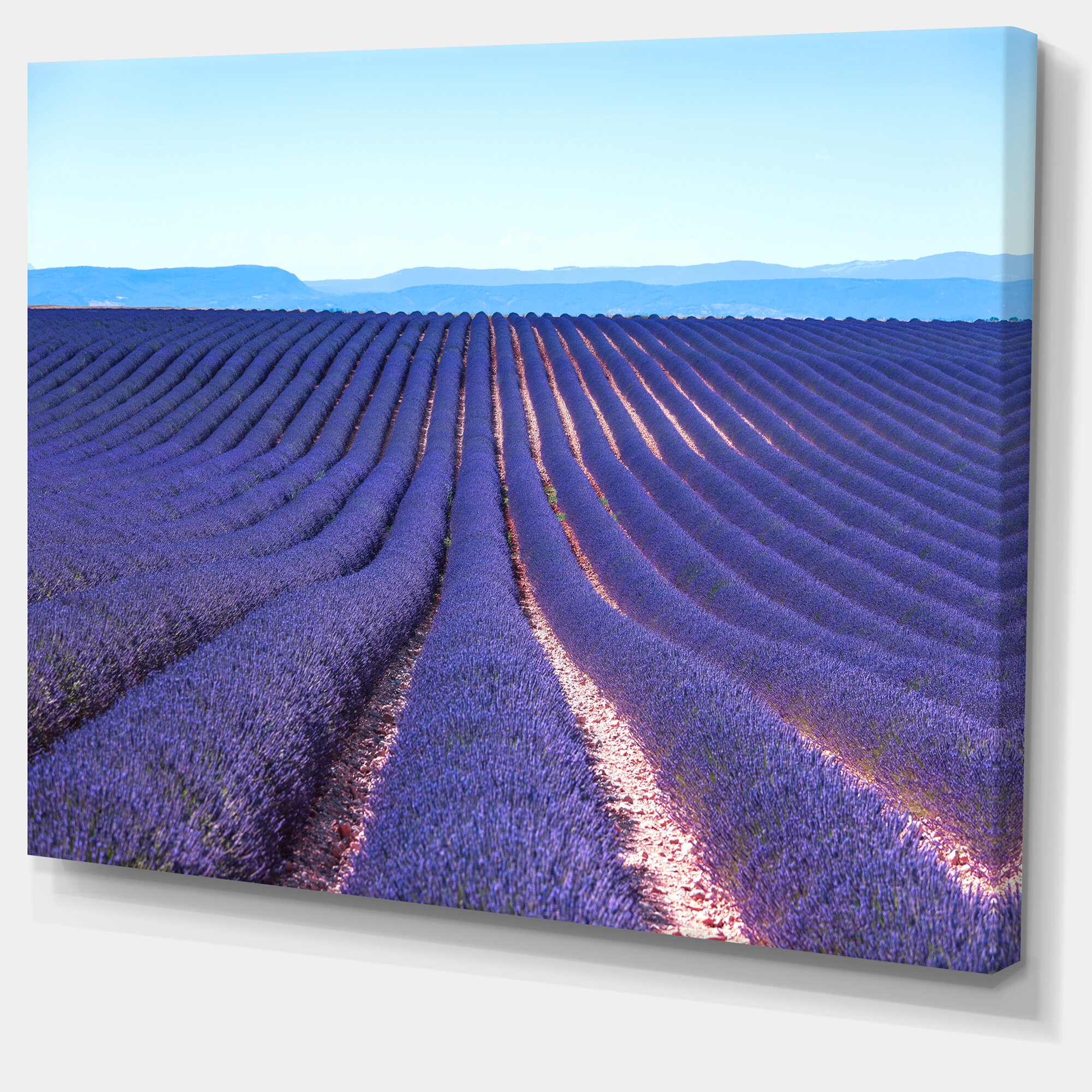 Designart Endless Rows Of Lavender Flowers Photographic Print On Wrapped Canvas Wayfair