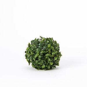 Plant Ball Boxwood Topiary