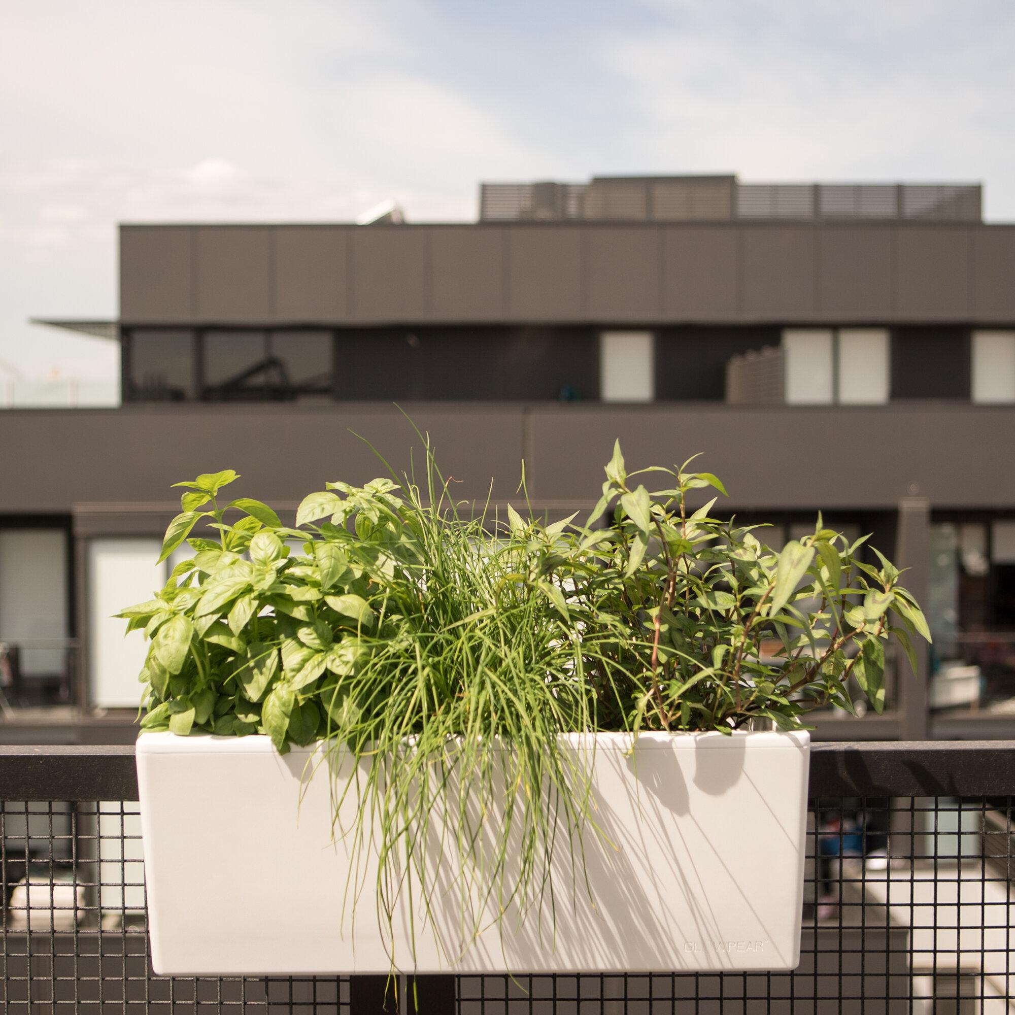 Picture of: Ebern Designs Toston Self Watering Plastic Railing Planter Wayfair