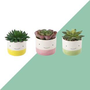 Desktop Succulent Plant in Pot (Set of 3)
