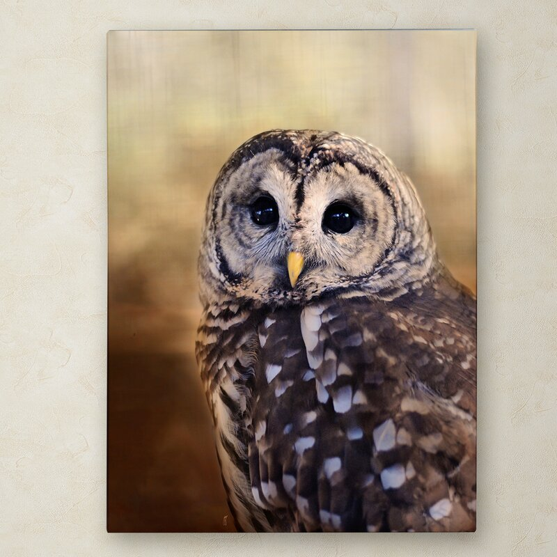 Trademark Art The Wise Owl Graphic Art Print On Wrapped Canvas Wayfair