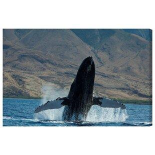 u0027Humpback Whale Hawaiiu0027 Wall Art on Canvas  sc 1 st  Wayfair & Whale Wall Art | Wayfair.co.uk