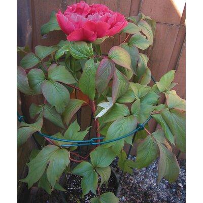 Flower Plant Support (Set of 12) Lusterleaf