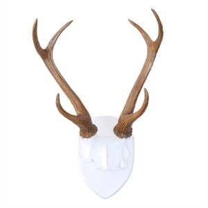 Faux Taxidermy Deer Antler Wall Du00e9cor