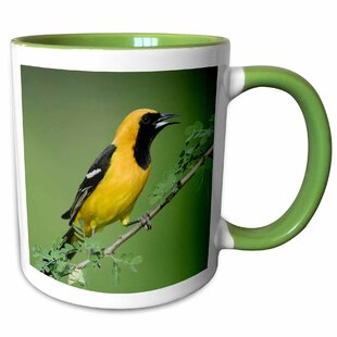 Bourgoin Hooded Oriole Bird, Rio Grande Valley, Texas Coffee Mug