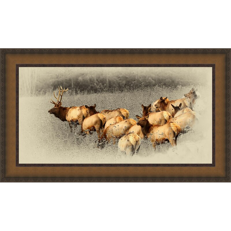 Ashton Wall Décor Llc Elk Herd Framed Photographic Print On Canvas Wayfair