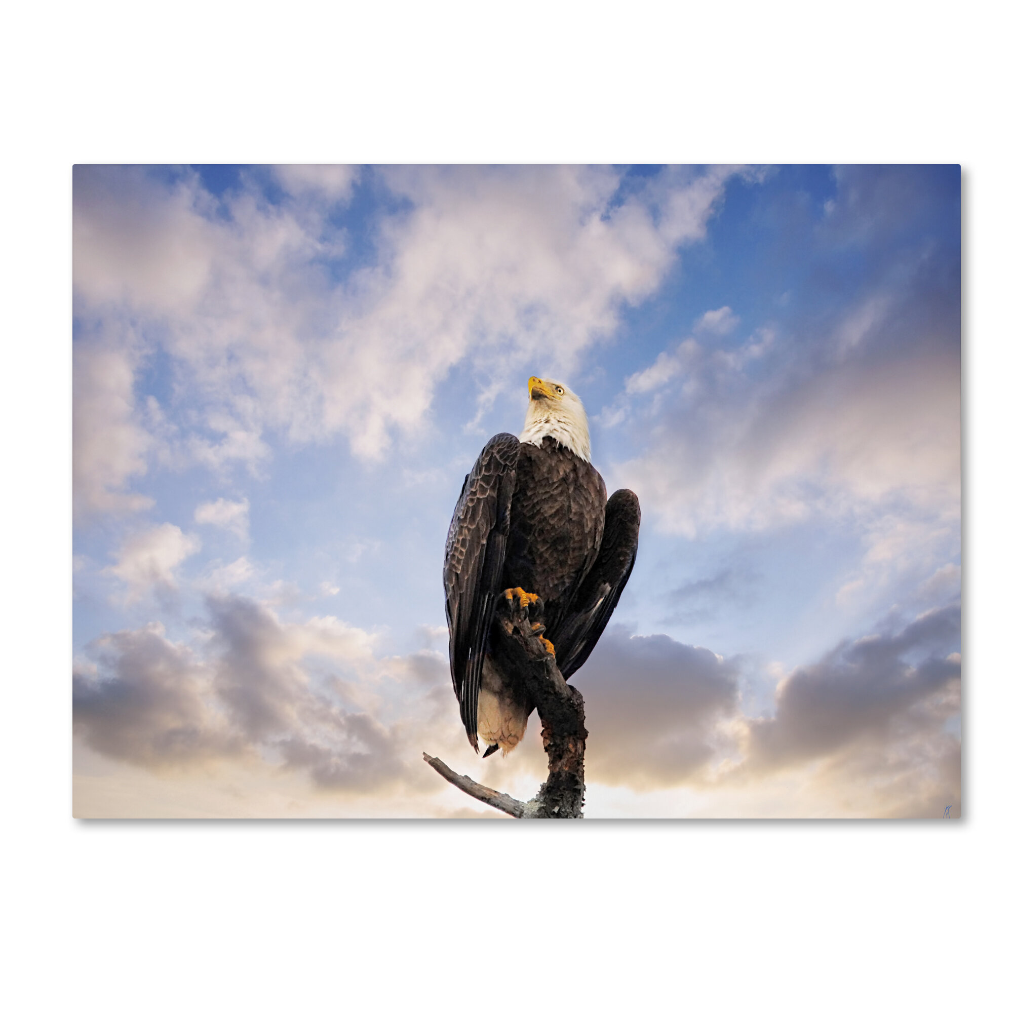 Trademark Art View From The Top Bald Eagle Graphic Art Print On