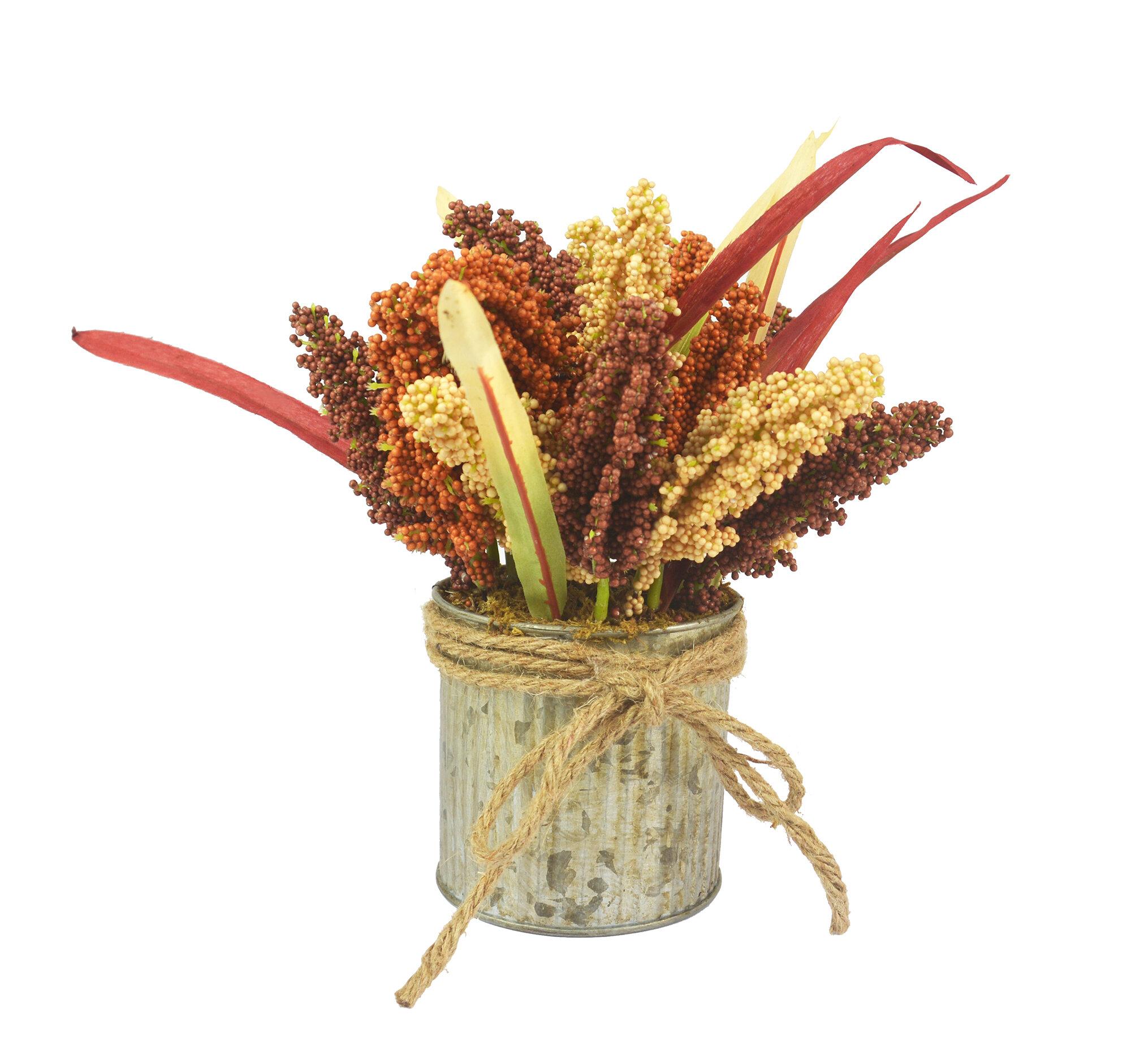 August Grove Heather Fern Plant In Pot Wayfair