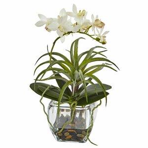 Moreno Orchid and Succulent Arrangement in Vase