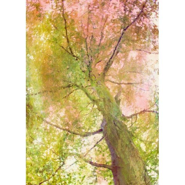 Hadleyhouseco Way Up By Hal Halli Photographic Print On Wrapped Canvas Wayfair