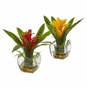 Leroy 2 Piece Bromeliad Arrangement in Vase Set
