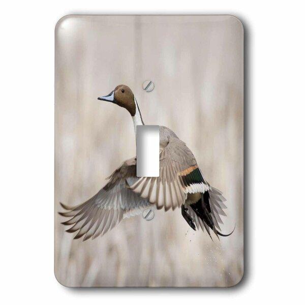 3drose Pintail Duck 1 Gang Toggle Light Switch Wall Plate Wayfair