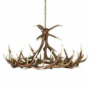 Millwood Pines Lavinia Elk 12-Light Novelty Chandelier
