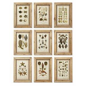 Aquatique 9 Piece Framed Graphic Art Print Set on Wood (Set of 9)