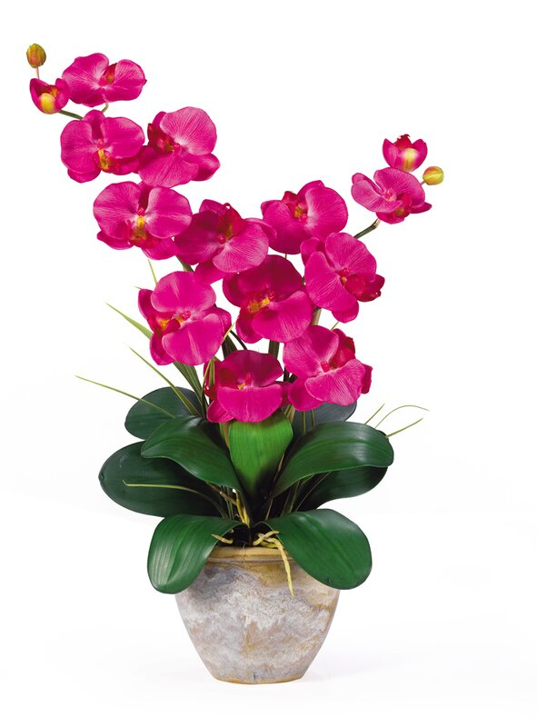 Nearly natural double phalaenopsis silk orchid flowers in beauty double phalaenopsis silk orchid flowers in beauty pink mightylinksfo
