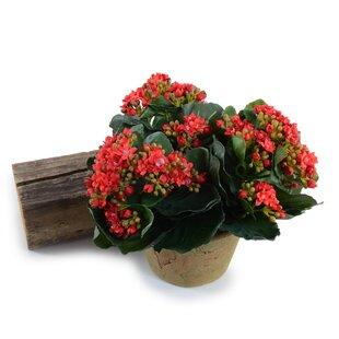 Daisies Floral Arrangement in Pot
