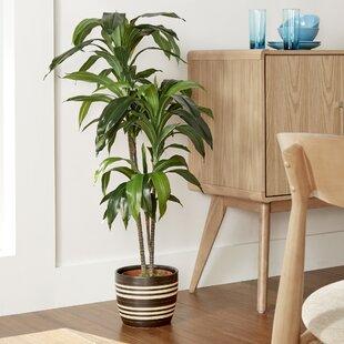 faux plants & trees | joss & main