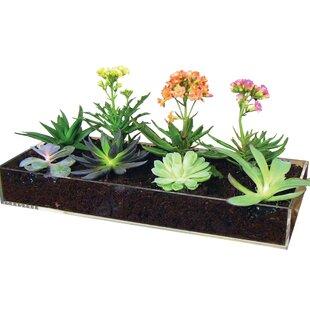 Multi-Use Planter Tray By Window Garden
