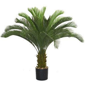 Cycas Palm Tree in Pot