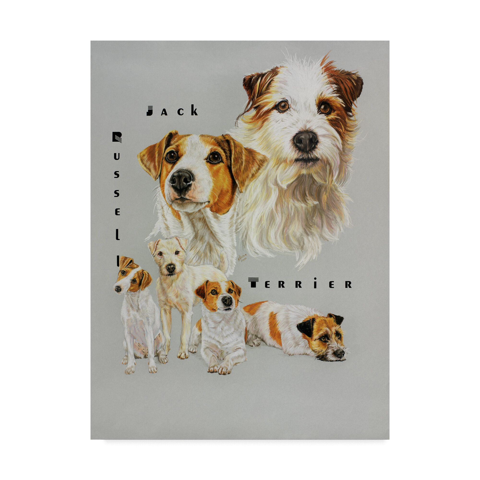 Trademark Art Jack Russell Terrier Oil Painting Print On Wrapped Canvas Photographic Print On Wrapped Canvas Wayfair