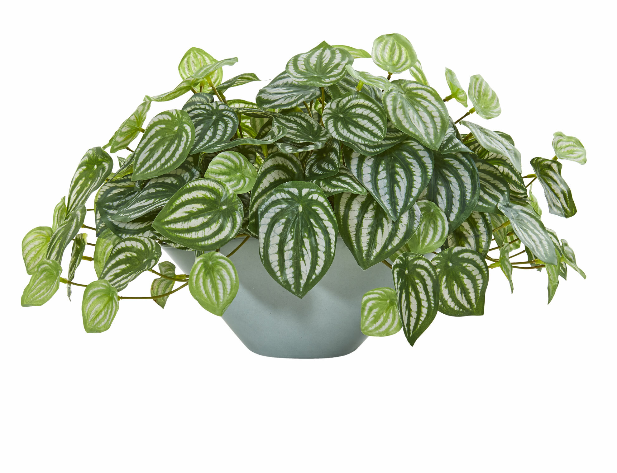 Charlton Home Artificial Watermelon Peperomia Foliage Plant In Decorative Vase Wayfair