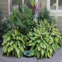 Deals on 6-Pack Touch of Eco Heart-Shaped Hosta Growing Kit