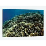 a-beautiful-and-fragile-coral-reef-grows-photographic-print-on-canvas