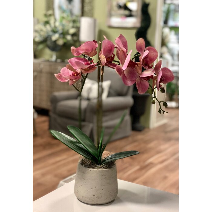 Phalaenopsis Orchid And Agave Artificial Arrangement In Vase